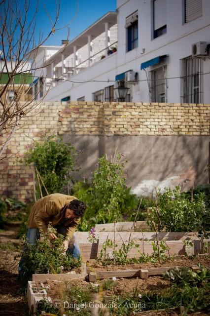 El huerto está inserto en pleno casco urbano